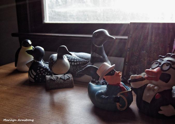 72-Dresser-Birds-Oddballs-111515_20