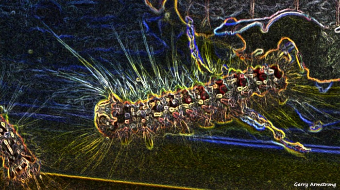72-Glowing-Gar-CATERPILLARS-060916_020