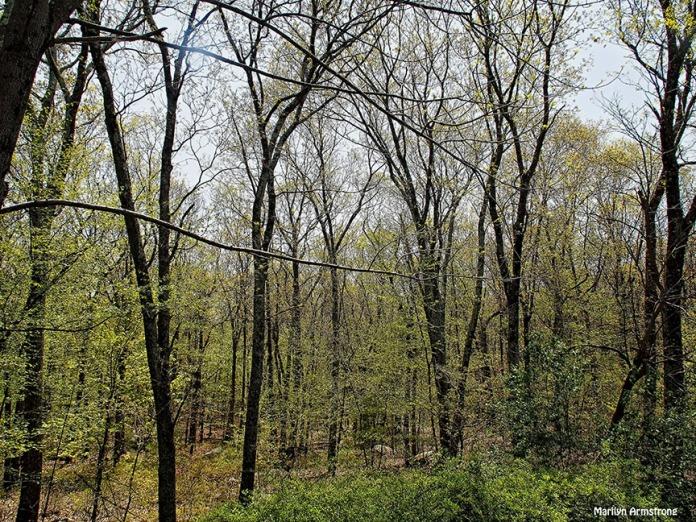 72-green-oaks051216_014