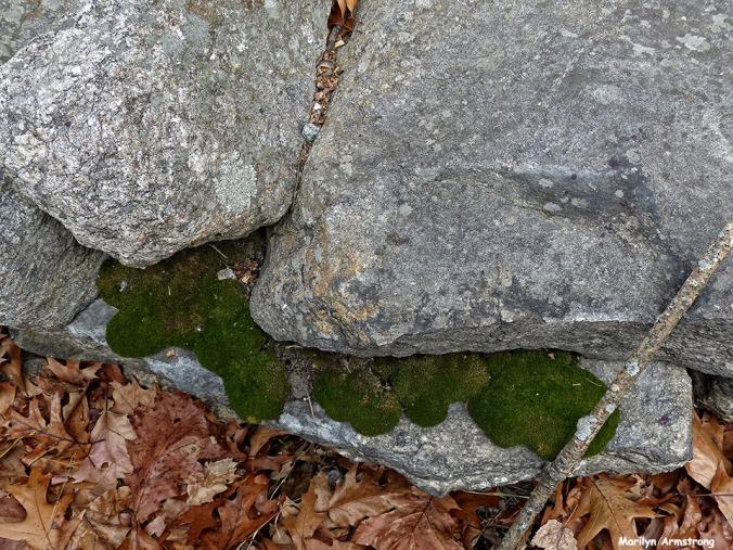 72-Lichen on Rocks_02