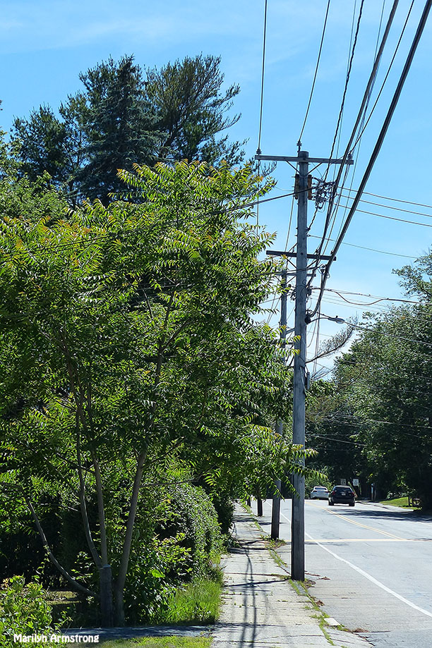 72-Main-Street-Summer-Solstice-062116_03