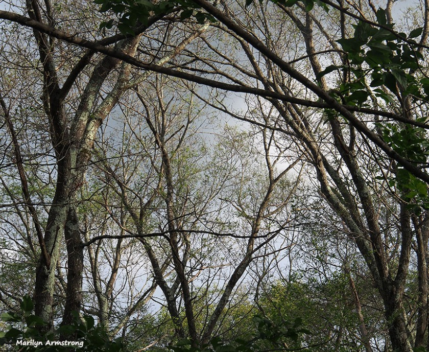 The disappearing canopy ...