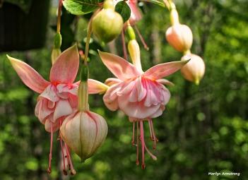 2-pink-fuchsia-060616_011