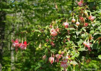 72-pink-fuchsia-060616_013
