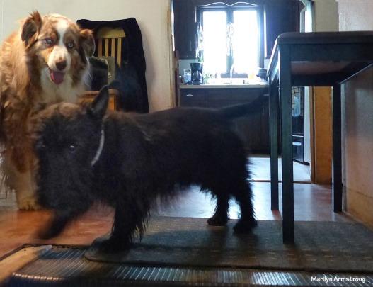 72-Play-Dogs-Oddballs052216_50