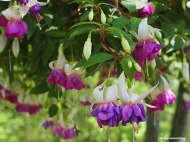 72-purple-fuchsia-060616_001