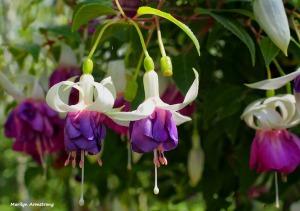 72-purple-fuchsia-060616_006