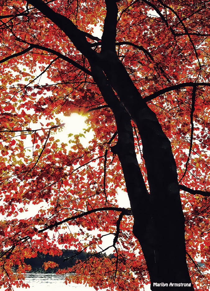 72-Red-Autumn-Tree-Webster-Lake