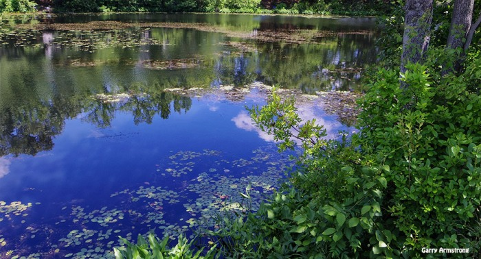 72-Reflections-Whitins-Pond-GA-061516_025