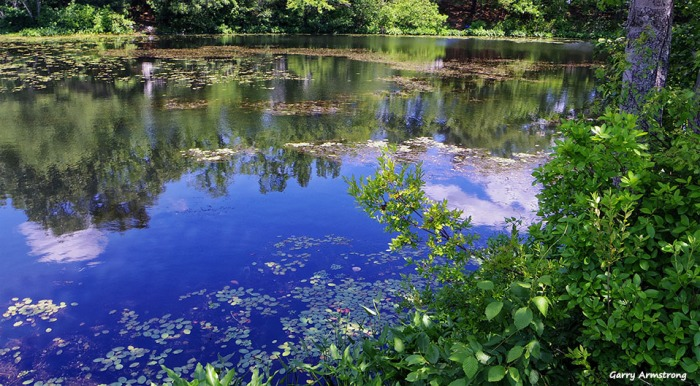 72-Reflections-Whitins-Pond-GA-061516_027