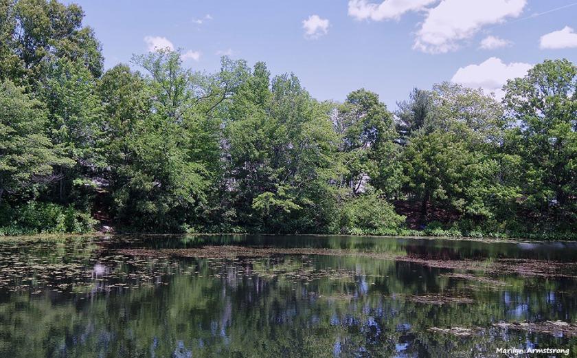 72-Swans-Whitins-Pond-MA-061516_082