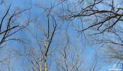 72-Treetops-Summer-Solstice-062116_11