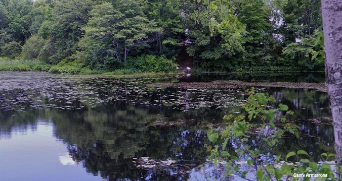 72-Whitins-Pond-GA-061516_061