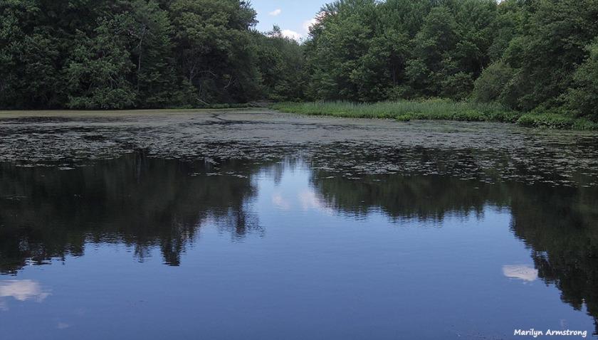 72-Whitins-Pond-MA-061516_094
