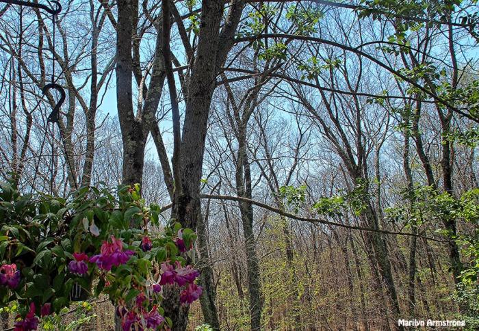 72-woods-fuchsia-062616_001