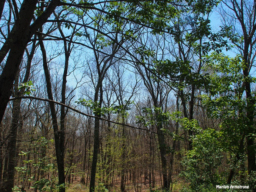 72-woods-recovering-062616_006