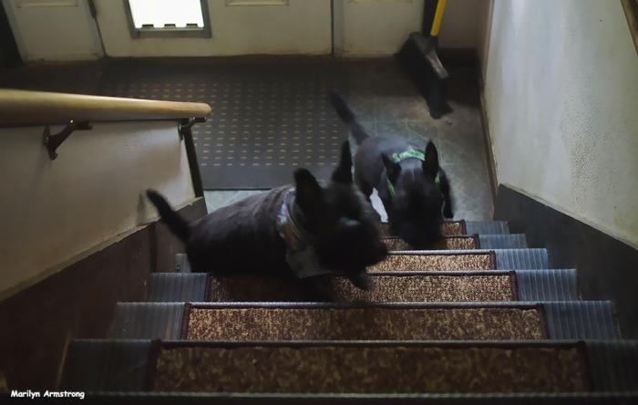 72-bonnie-gibbs-stairs-072716_29