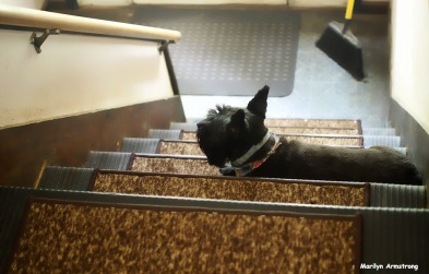 Bonnie on the stairs