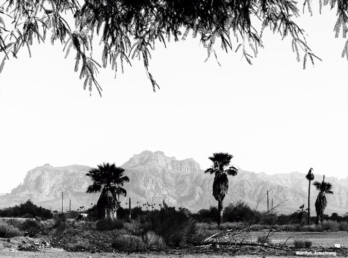Three big date palms under a bigger dome of sky against a huge backdrop of mountains & desert