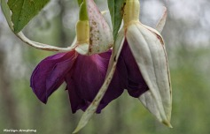 72-fuchsia-macro-071016_005