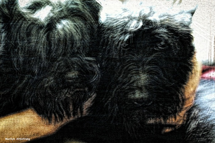 Two Scotties in antique colors