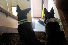72-waiting-scotties-tub-073016_023