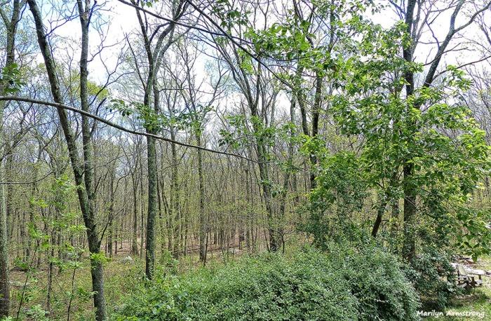 72-Woods-070516_17