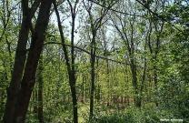 72-woods-changing-seasons-072116_04