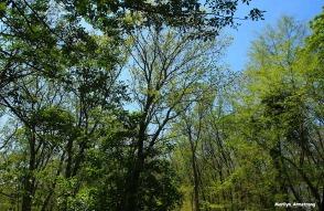 72-woods-sky-changing-seasons-072116_24