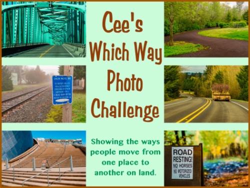 Cee which way photo challenge