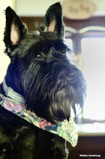 72-Bonnie-SCOTTIES-080316_17