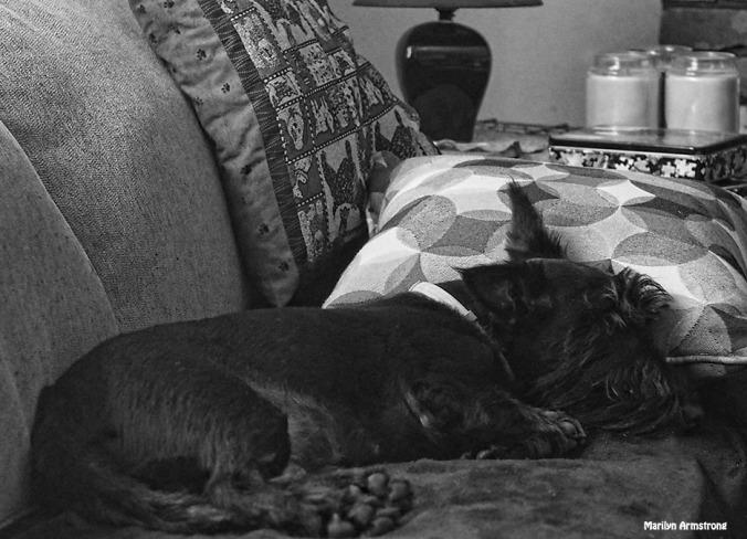 72-bw-gibbs-sofa-nap-081116_015
