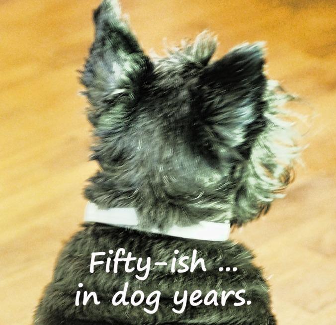 72-dog-years-082216_034