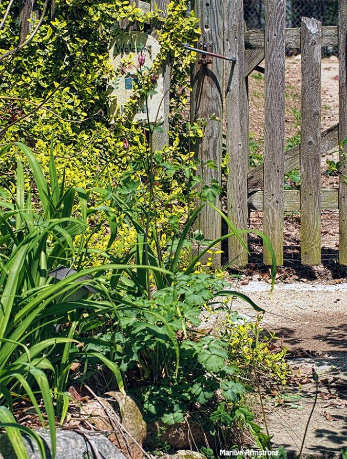 72-garden-gate-path-051216_017