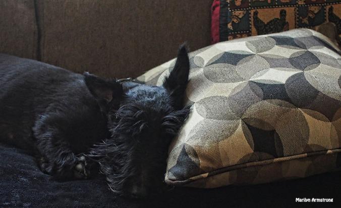 72-gibbs-nap-sofa-081116_001