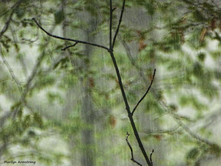 72-Rain-080616_07