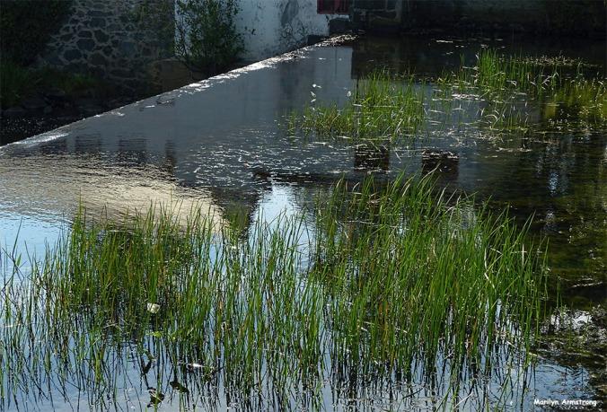 72-Reflection-Mumford-MA-082516_066