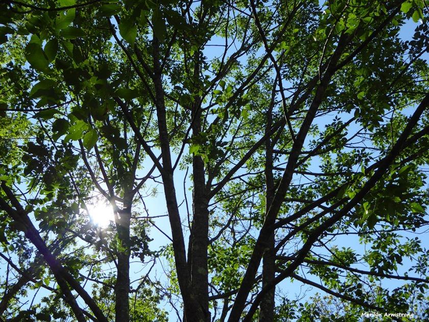72-Sun-thru-trees-Deck-Woods-080416_009