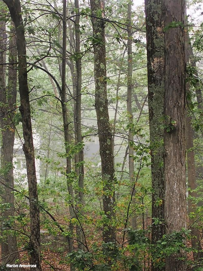 72-wet-woods-sudden-rain-081216_005