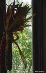 72-window-corn-morning-inside-080516_008