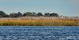72-autumn-marsh-09222016_081
