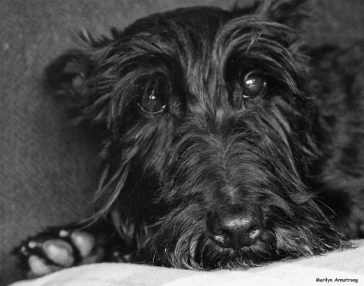 72-bw-gibbs-portrait-090316_09