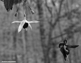 72-bw-two-macro-fuchsia-080416_019