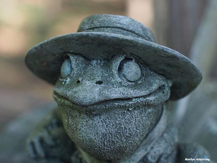 72-froggy-eyes-mid-september-deck-09132016_016