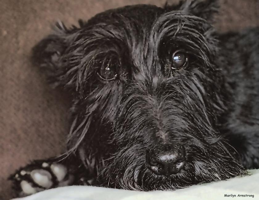 72-gibbs-portrait-090316_09
