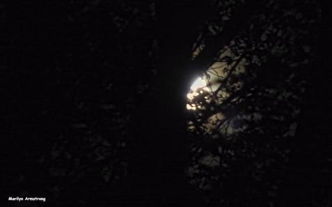 72-harvest-moon-09162016_01