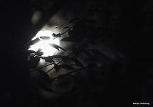 72-harvest-moon-09162016_02