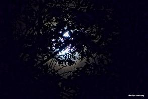 72-harvest-moon-09162016_14