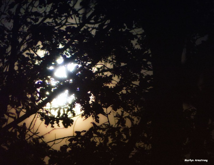 The full Harvest Moon behind the trees