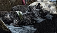 72-portrait-sleeping-scotties-080216_05